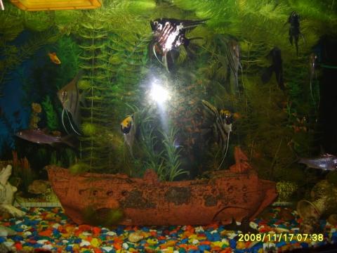 Мой домашний аквариум - Татьяна Викторовна Макова