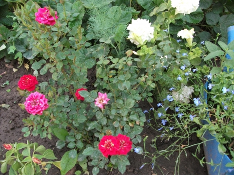 цветы - Любовь Андреевна Зачетнова