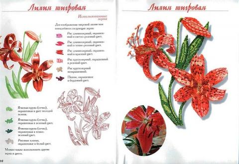 8 - Елена Николаевна Шафоростова