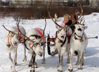 Оленьи упряжки на Празднике Севера в Мурманске