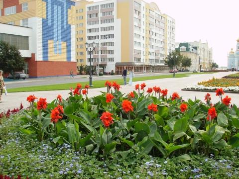 Городская клумба - Городские цветы