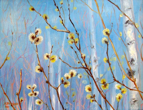 Верба цветёт