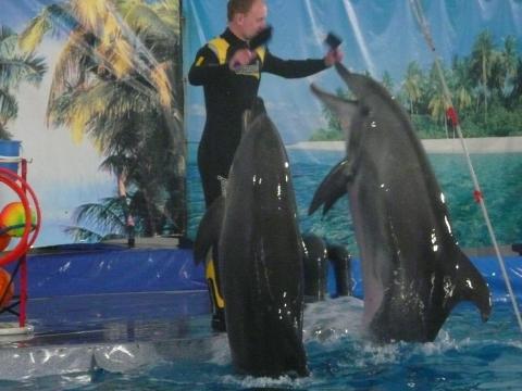 дельфинарий - Разина Закирьяновна Мавлютова