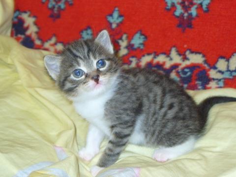 Мой котенок - Олеся Александровна Матюхина