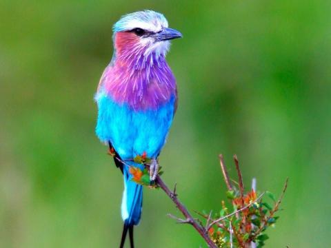 Красивейшие птицы - Александр Николаевич Комлев
