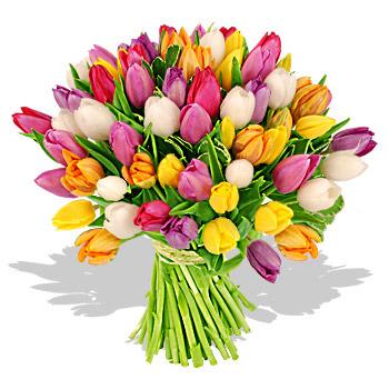 Разноцветные тюльпаны.