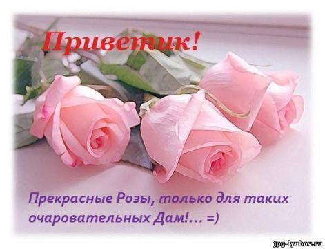 Розы прекрасной даме