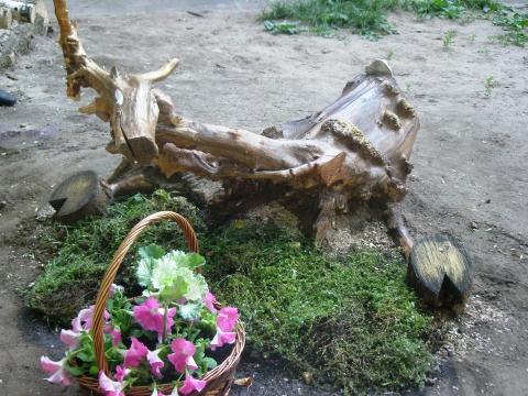 Олень - Городские цветы