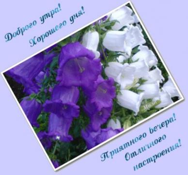 Доброго утра!Хорошего дня! Приятного вечера! Отличного настроения!