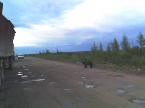 Мишки на дороге! - Александр Николаевич Комлев
