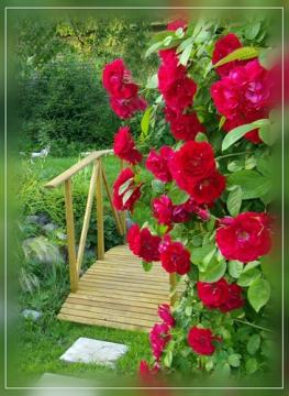 Цветы - Гульжиган Мухаммедовна Гайнуллина