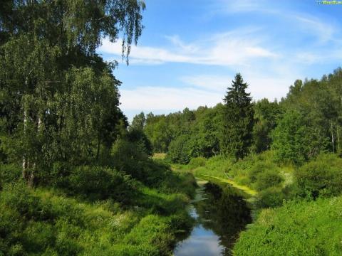 Речка в лесу - Ирина Александровна Харченко