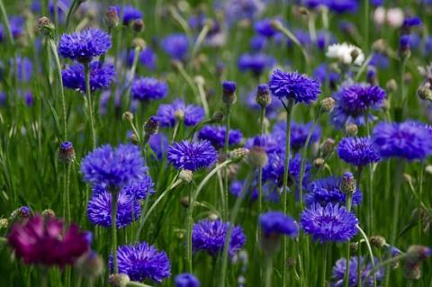 цветы полевые....
