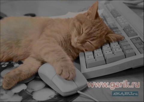 Кот на клаве