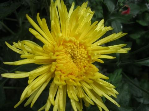 Солнышко в моем саду - Елена Юрьевна Мушкадинова