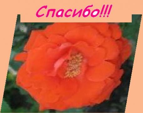 Без названия - Галина Анатольевна Гришина