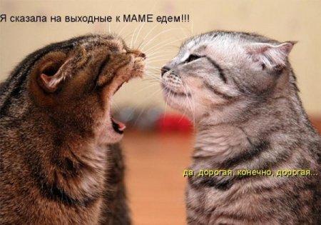 Без названия - Ирина Николаевна Королёва