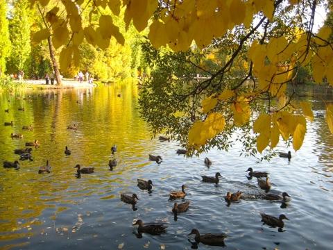 Осень - Любовь Ивановна Давыдова