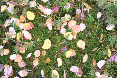 Ковёр из листьев - Анна Григорьевна Гудимова