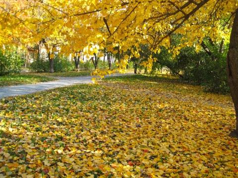 Золотая осень! - Любовь Ивановна Давыдова