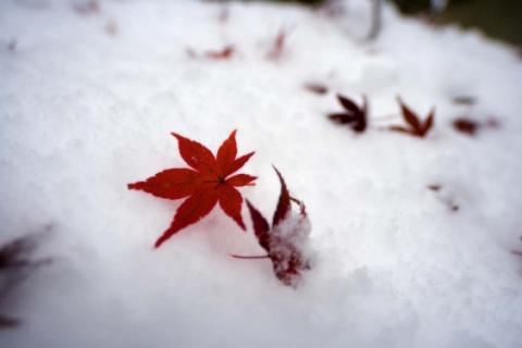Осень с зимою повстречались...