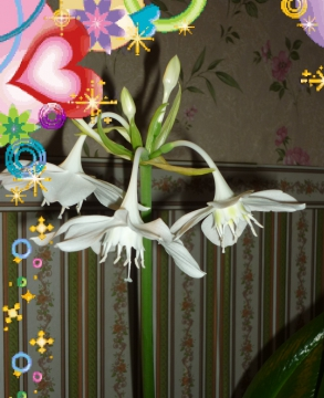 цветок - Татьяна Алексеевна Кузнецова