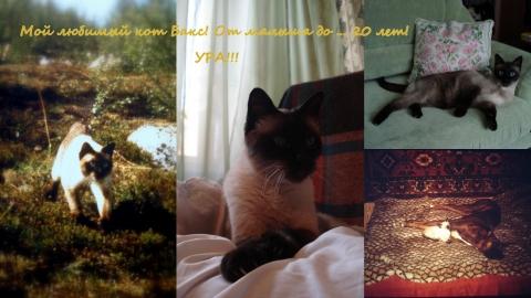 Мой любимый кот Бакс! - Алёна Александровна Соломатина