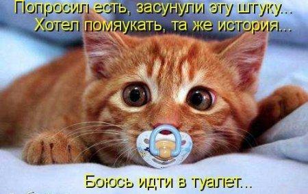 Кошкины желания
