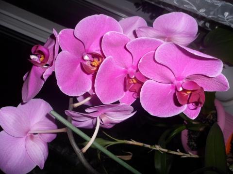 орхидеи - Наталья Викторовна Левченко