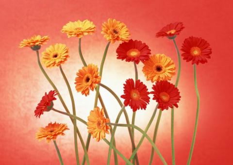 Любимые цветы...