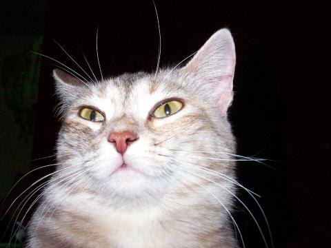 Кошка чуткая