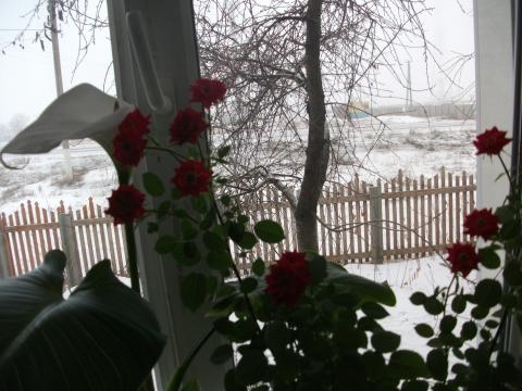 1января 2012г - Любовь Андреевна Зачетнова