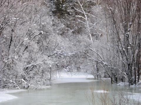 Кто сказал, что зимой деревья голы?