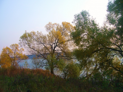 Осень - Инна Юрьевна Румянцева
