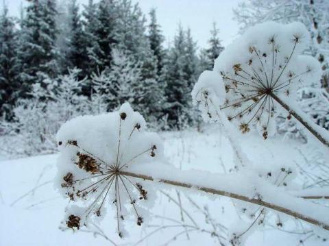 Зимний февральский  пейзаж.