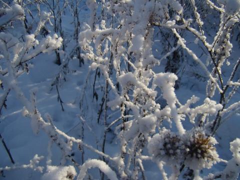Снежная нежность