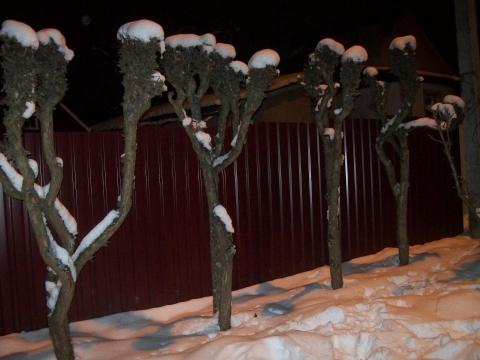 Зима 2012 - Нина Васильевна Кобзарь