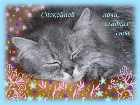Спокойной ночи! - Светлана Анатольевна Щедрина