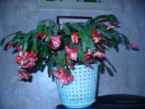 Мой любимый цветок. - Любовь Сергеевна Тришина