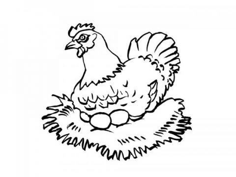 Раскраска яйца куриные