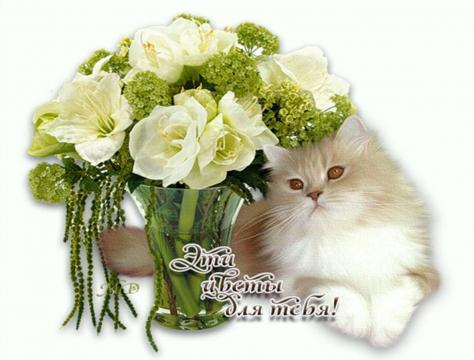 Цветы для тебя!
