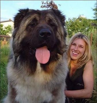 Ещё один пёсик - Ольга Владимировна Назарова