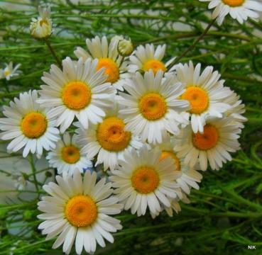 Солнышко в белых ресничках