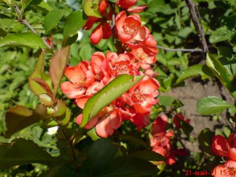 В моем саду... - Надежда Анатольевна Дьяченкова