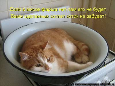 котик - Наталья Германовна Будкина