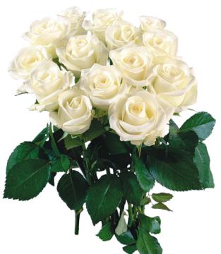 Розы! Белые!