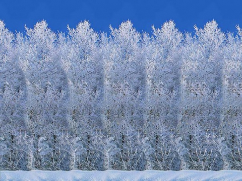 зимний лес - Татьяна Александровна Решетникова
