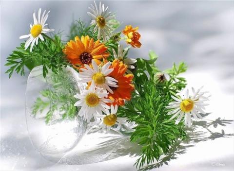 ромашки-цветы