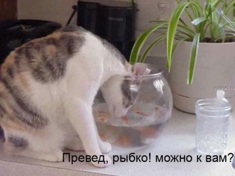 Привет, рыбка! - Ольга Владимировна Назарова