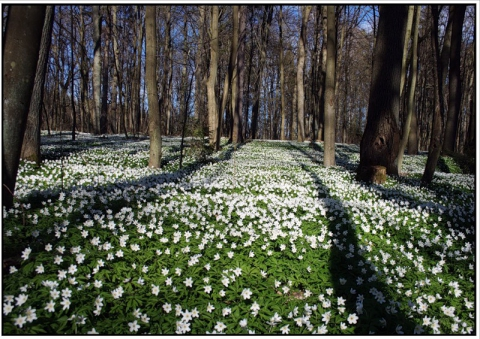 Прогулка по весеннему лесу... - Людмила Григорьевна Шатунова
